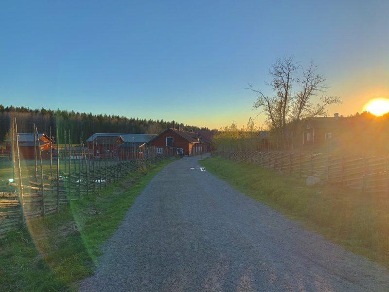 solnedgång-i-tyresta-nationalpark